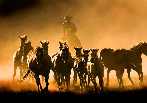 Horses Wrangler Ranching Art Print featuring the photograph Driving the Herd by Lourie Zipf