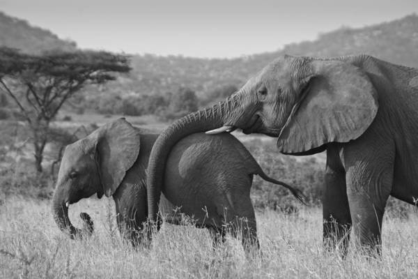 Africa Art Print featuring the photograph Maternal Love by Michele Burgess