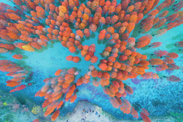 Tranquility Art Print featuring the photograph Aerial Drone View With Fir Tree Fall by Yaorusheng