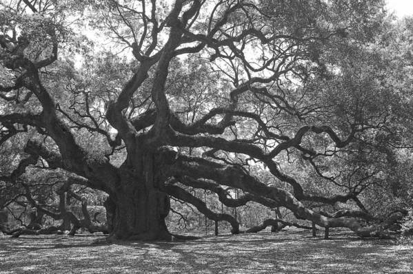 Black And White Art Print featuring the photograph Angel Oak II - Black and White by Suzanne Gaff