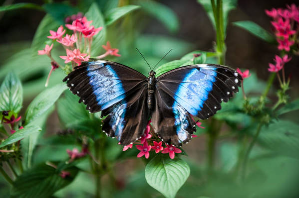 Flower Art Print featuring the photograph Black and Blue Wings by Paul Johnson