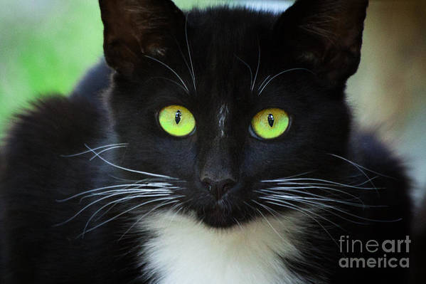 Black Cat With Beautiful Green Eyes Art Print By Jerry Cowart