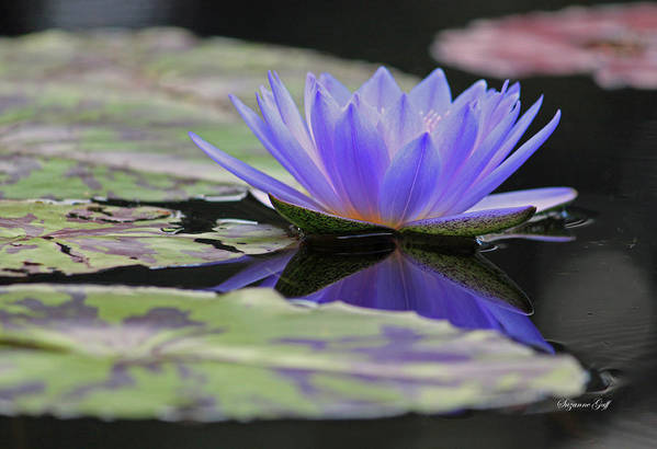 Water Art Print featuring the photograph Blue Purple Dreams by Suzanne Gaff