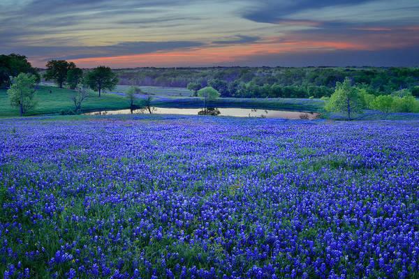 Texas Bluebonnets Art Print featuring the photograph Bluebonnet Lake Vista Texas Sunset - Wildflowers landscape flowers pond by Jon Holiday