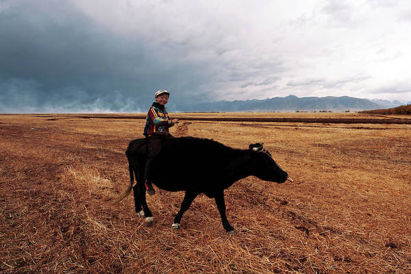 Scenics Art Print featuring the photograph Boy Sitting Cow In Field by Touch The Word By Heart.
