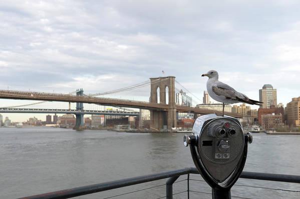 Lower Manhattan Art Print featuring the photograph Brooklyn Bridge by Kevinjeon00