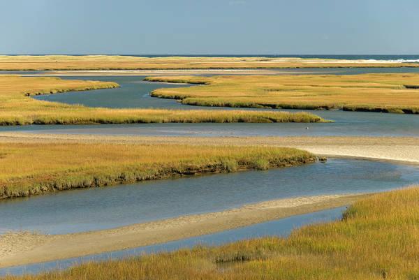 Grass Art Print featuring the photograph Cape Cod Wetlands by Frankvandenbergh