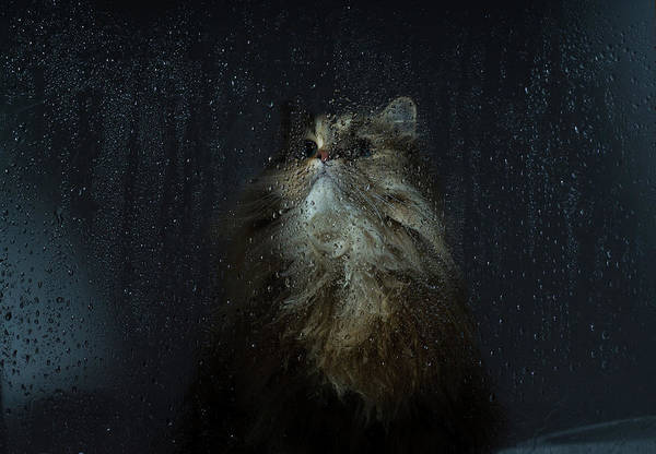 Pets Art Print featuring the photograph Cat By Rainy Window by Benjamin Torode