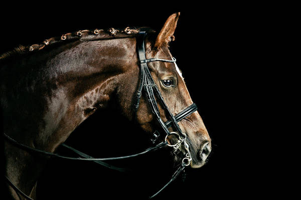 Horse Art Print featuring the photograph Chestnut Dressage Horse Groomed For A by Anja Hild