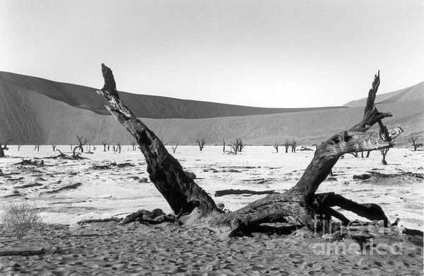 Acacia Trees Art Print featuring the photograph Deadvlei by Susan Chandler