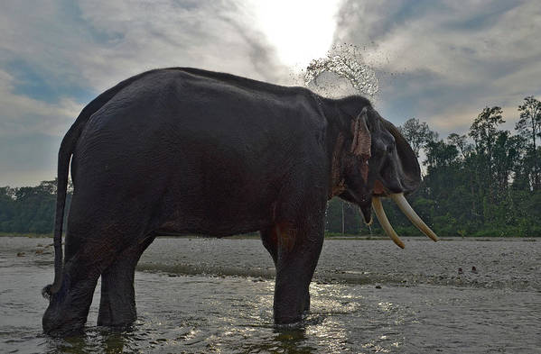 Animal Themes Art Print featuring the photograph Elephant Taking A Shower On Its Own by Photograph By Anindya Sankar Dey