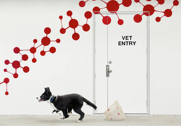 Dog Art Print featuring the photograph Escape At The Vet by Jacqueline Hammer
