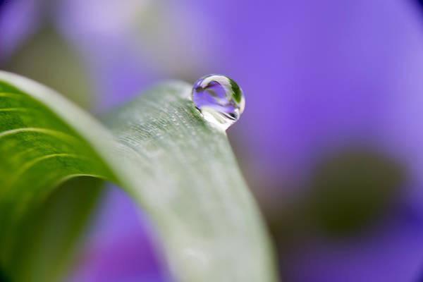 Flower Art Print featuring the photograph Flower Petal in a Raindrop by Paul Johnson