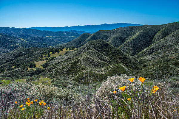 Mountains Art Print featuring the photograph Flowers and Mountains by Paul Johnson
