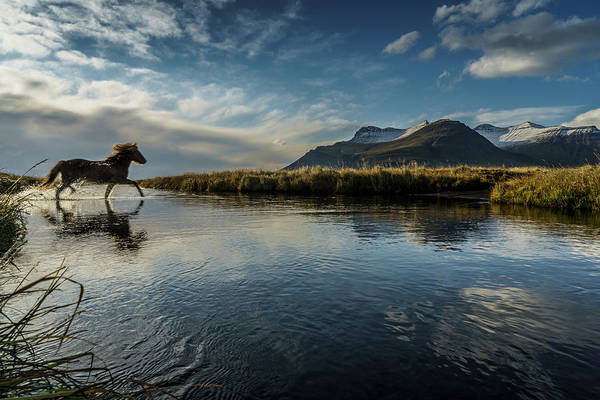 Majestic Art Print featuring the photograph Horse Crossing A River, Iceland by Arctic-images