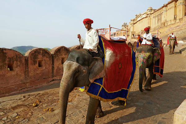 Working Animal Art Print featuring the photograph India, Rajasthan, Jaipur The Pink City by Tuul & Bruno Morandi