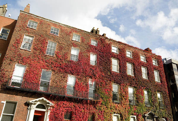 Dublin Art Print featuring the photograph Ivy Covered Georgian Style Building In by Lleerogers