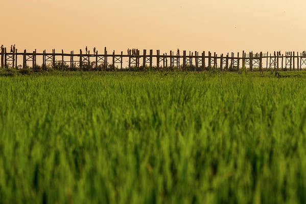Built Structure Art Print featuring the photograph Large Rice Paddy Below U Bein Bridge by Merten Snijders