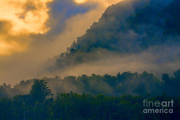 Trees Art Print featuring the photograph Mist amongst trees by Sheila Smart Fine Art Photography