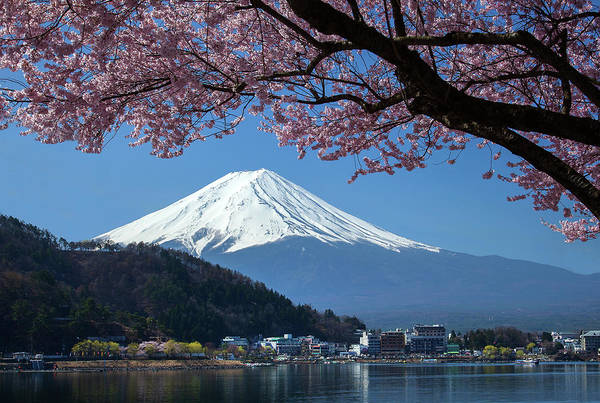 Snow Art Print featuring the photograph Mt Fuji And Cherry Blossom by Mantaphoto