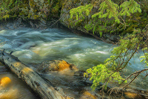 Brook Art Print featuring the photograph Take Me Softly Across The Water by Tim Reaves