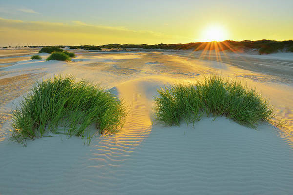 Scenics Art Print featuring the photograph North Sea Sandbank Kniepsand by Raimund Linke