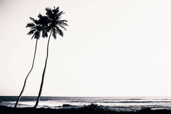 Empty Art Print featuring the photograph Palm Trees And Beach Silhouette by Chrispecoraro
