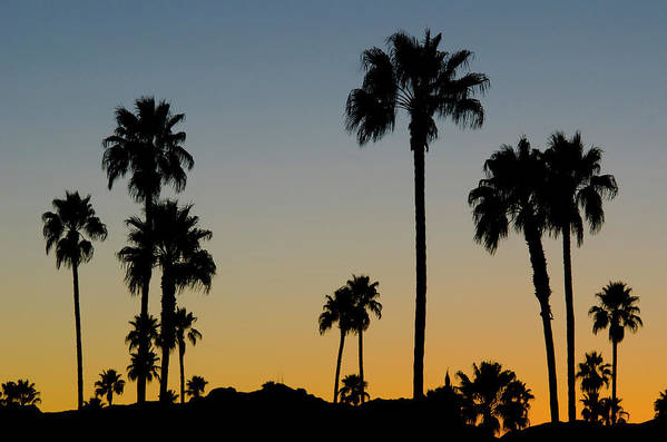 Scenics Art Print featuring the photograph Palm Trees At Sunset by Chapin31