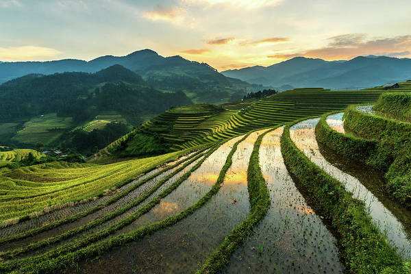 Scenics Art Print featuring the photograph Rice Terraces At Mu Cang Chai, Vietnam by Chan Srithaweeporn