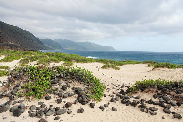Honolulu Art Print featuring the photograph Rocks And Greenery In The Sand Leading by Brandon Tabiolo / Design Pics