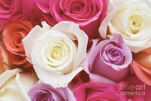 Romantic Flower Photo Art Print featuring the photograph Romantic Rose Garden by Kim Fearheiley