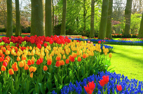 Flowerbed Art Print featuring the photograph Spring Flowers In A Park by Jacobh