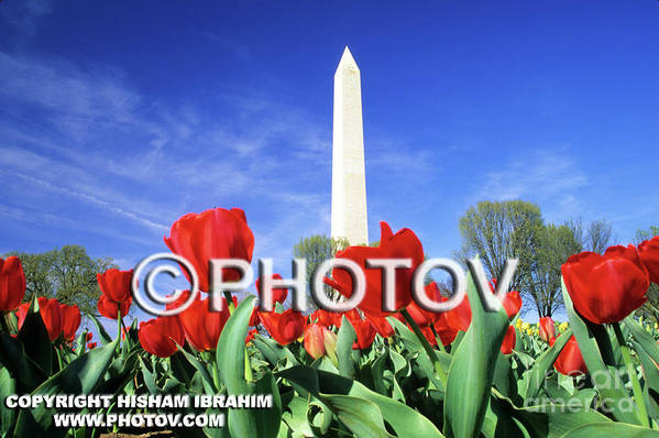 White Art Print featuring the photograph Spring In Washington - Limited Edition by Hisham Ibrahim