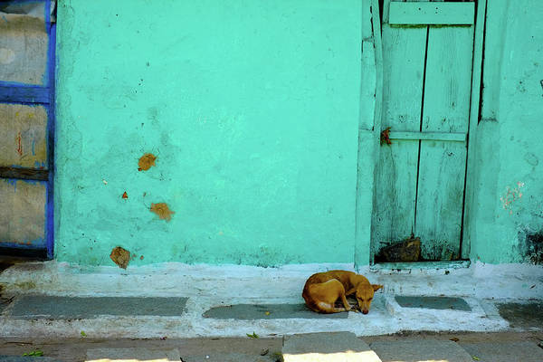 Security Art Print featuring the photograph Stray Dog On Street Against Green by Prajoesh Chathoth / Eyeem