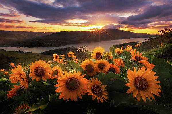 Outdoors Art Print featuring the photograph Sunflower Field by Jeremy Cram Photography