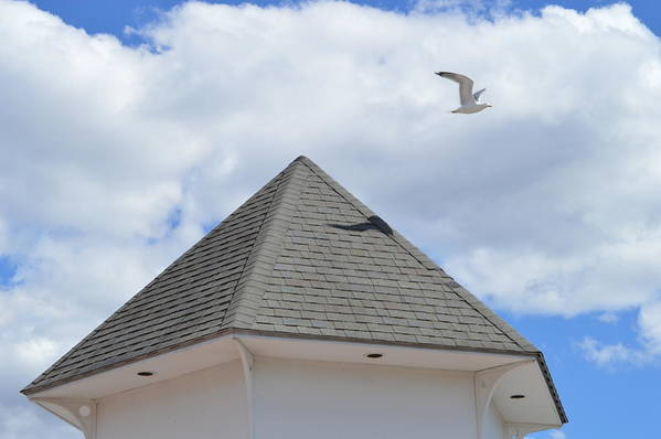 Gull Art Print featuring the photograph Taking Off by Jessica Cruz