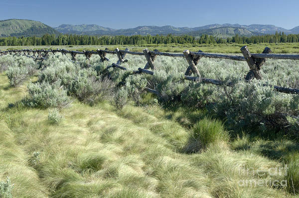 Grand Teton National Park Art Print featuring the photograph Along the Fence by Sandra Bronstein