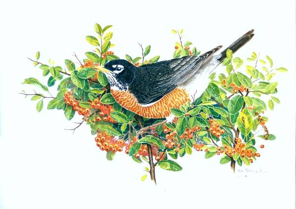 Robin Art Print featuring the painting Robin on Pyracantha by Bill Gehring