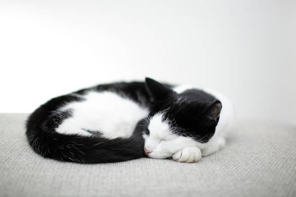 Horizontal Art Print featuring the photograph Sleeping Cat by Marcel ter Bekke