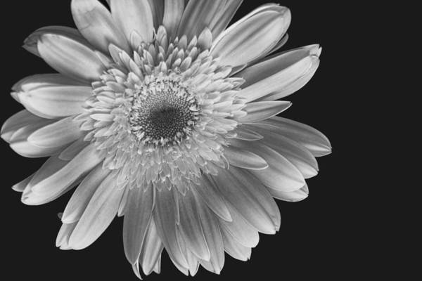 Flower Art Print featuring the photograph Sunny Side Up by Katherine Morgan