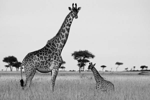 Africa Art Print featuring the photograph Meet My Little One by Michele Burgess