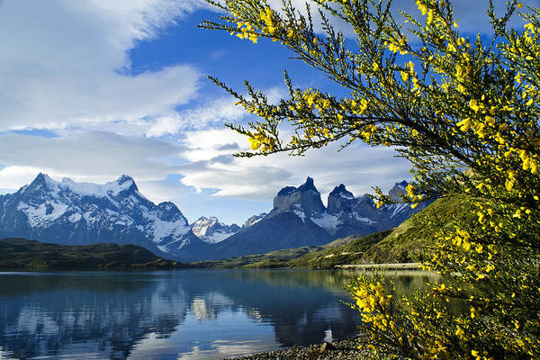 Patagonia Art Print featuring the photograph Springtime in Torres del Paine by Michele Burgess