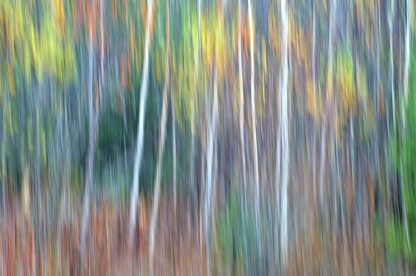 Forest Pastels Form An Autumn Impression Art Print featuring the photograph Autumn Impression by Bill Morgenstern