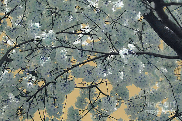 Blossoms Art Print featuring the photograph Blossoms by Katherine Morgan