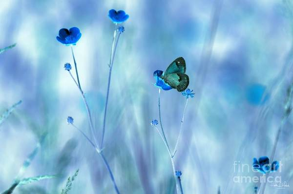 Flowers Art Print featuring the photograph Blue Buttercups by Heather Hubbard