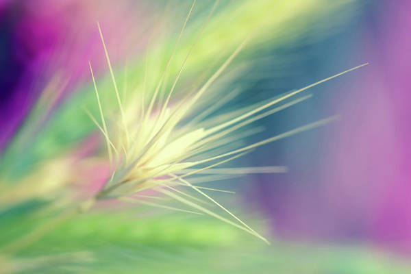 Bright Colors Art Print featuring the digital art Bright Weed by Terry Davis