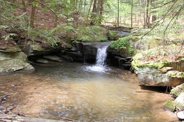 Streams Art Print featuring the photograph Brook Trout Falls by Carolyn Postelwait