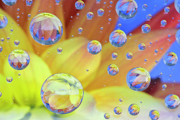 Macro Art Print featuring the photograph Dahlia Galaxy Two by Marla Craven
