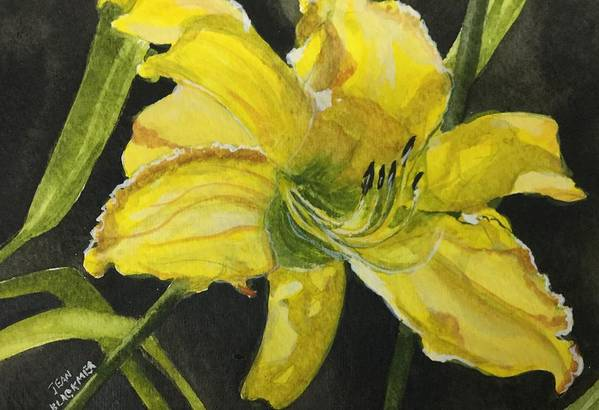 Yellow Art Print featuring the painting Daylily Study V by Jean Blackmer