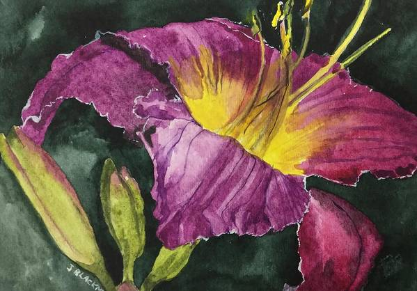 Daylily Art Print featuring the painting Daylily Study VI by Jean Blackmer